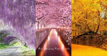 人生必看的5個夢幻樹景!櫻花、紫藤、銀杏,被絢爛浪漫的花海包圍就是幸福吧?