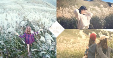這次終於不用只有被小鹿追了!奈良縣絕美曾爾高原拍照打卡地,這裡比韓國天空公園還要更美欸~