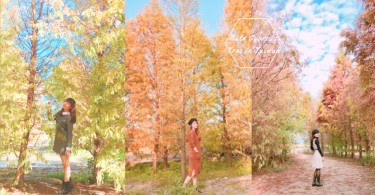 冬日的浪漫!台中泰安落羽松新秘境,如羽毛般輕盈溫暖的黃色美景〜