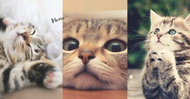 主子出沒注意!30張「超萌貓星人討摸」手機Wallpaper,皇恩浩蕩關注度輕鬆全取~