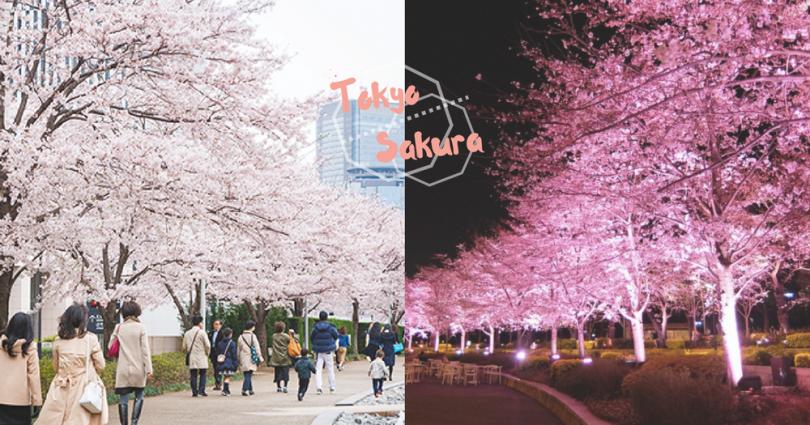 也許是東京「最近賞櫻地點」!六本木「MIDTOWN BLOSSOM」櫻花節,感受櫻花日與夜的美!