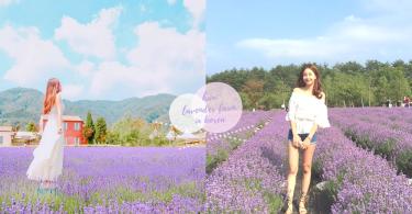 北海道以外的選擇!韓國6月「高城薰衣草節」~走進紫色村莊與香氣之中!
