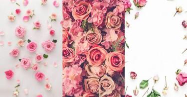 【玫瑰控必備的手機桌布】