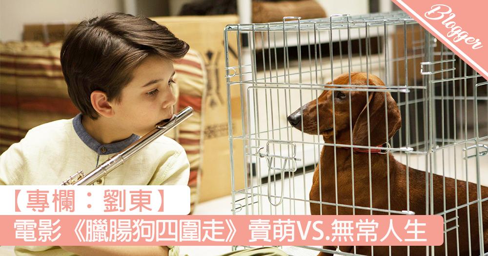【電影《臘腸狗四圍走》賣萌 VS. 無常人生】